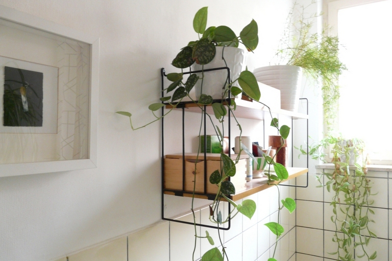 Add a Plant. 4 Ways to Freshen Your Bathroom for Spring   Maeve  39 s Method